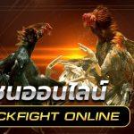 การแทงไก่ชนออนไลน์ Cock Fighting