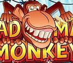 Mad Mad Monkey แมดแมดมังกี้